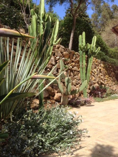 Massif de cactus entretien et r novation de piscine et for Entretien jardin 41
